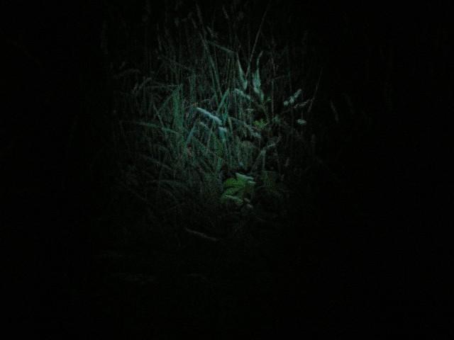 Впечатления от фонаря Inova Bolt, 3.8 W White LED, 2 AA и модернизация фонаря MAG-LITE Mini Maglite, обзор