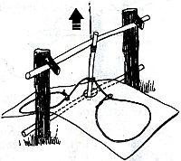 силки распологаются на платформах с обеих сторон ловушки