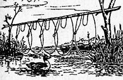 ловля водоплавающих птиц