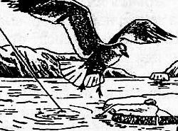 чаек можно ловить, подбрасывая в воздух камень, завернутый в пищу