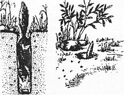 ловля мелких животных