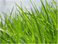 Трава, кора, листья, древесина и сок растений