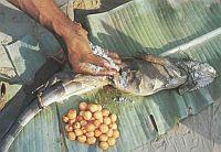Употребление в пищу ящериц, блюда из ящериц, рецепт супа из игуаны, экстремальная кухня