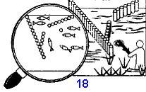 вариант верши-садка для рыбы