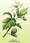 Ядовитые дикорастущие растения опасные для здоровья человека