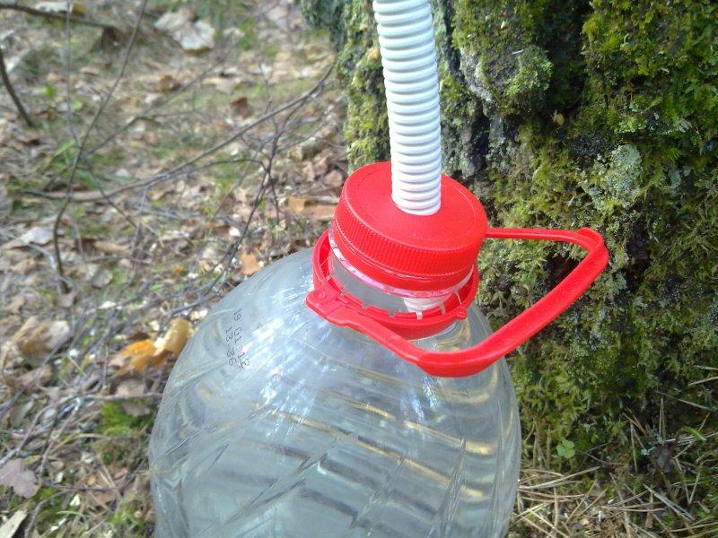 Березовый сок, способ добычи, каждую весну я собираю берёзовый сок