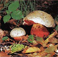 Как избежать отравления ядовитыми растениями, грибами и ягодами при выживании в аварийной ситуации