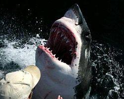 Употребление в пищу мяса акулы, блюда из акулы, рецепт оладьев с акульим мясом, экстремальная кухня