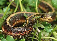 Нетрадиционные продукты питания при выживании, змеи, лягушки, тритоны, черепахи, моллюски, птицы, грызуны