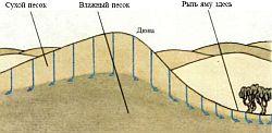 Обеспечение водой в пустыне, поиск воды в пустыне, грунтовые воды, индикаторы наличия воды в пустыне