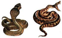 Профилактика и лечение заболеваний в тропиках, помощь при укусах змей, пиявок и насекомых, малярия, желтая лихорадка