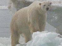 Профилактика и лечение заболеваний в условиях Арктики, замерзание, отморожения, траншейная стопа
